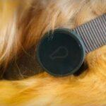 WHISTLE-DOG-GPS-2