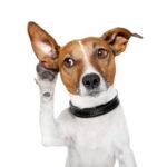 cane-che-ascolta