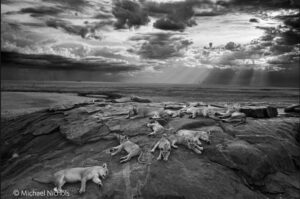 vincitore concorso wildlife photographer of the year 2014