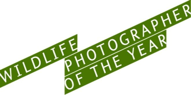 Wildlife Photographer of the Year 1