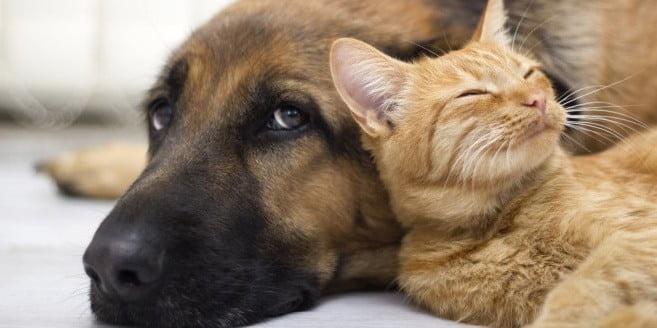 trasloco con animali domestici