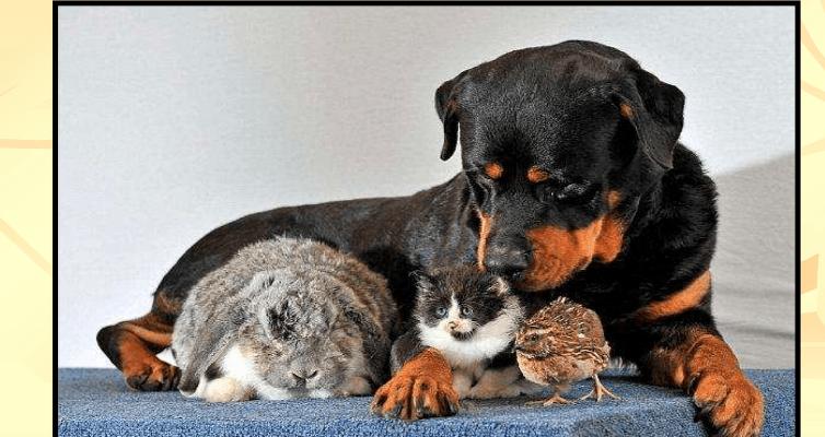animali-in-citta